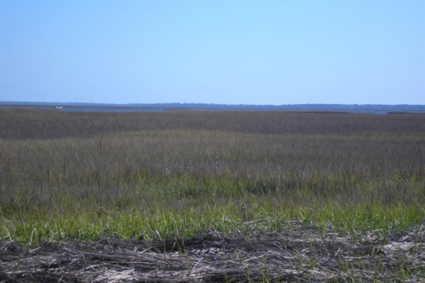 NW marsh overview to chnl.JPG