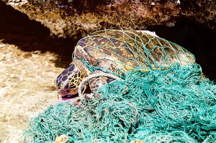 California's Fishery Management Rejects Proposal to Expand the Use of Drift Gillnets off California Coast