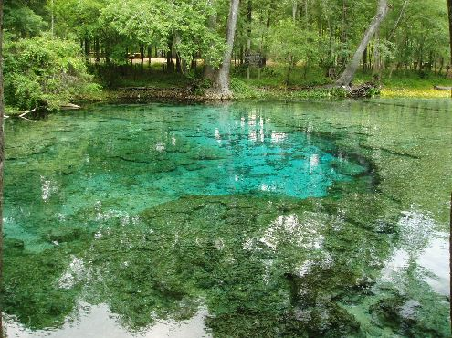 ginniesprings