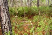Objective-Based Vegetation Management and Monitoring (OBVM) at Caravelle Ranch Wildlife Management Area (WMA) and Half Moon WMA, Florida Fish and Wildlife Conservation Commission (FWC)