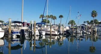 Submerged Aquatic Vegetation and Natural Resources Survey of Dunedin Municipal Marina, Pinellas County, Florida