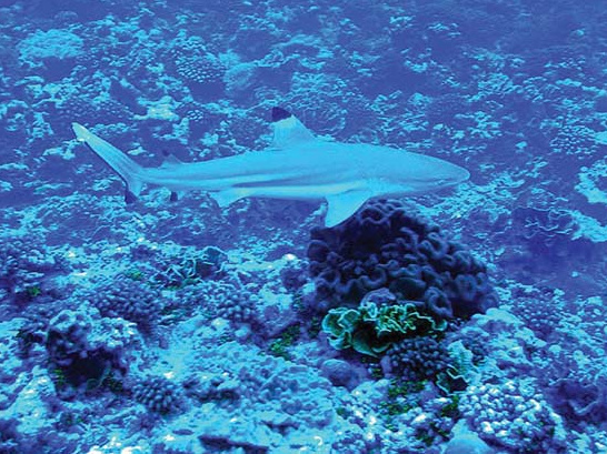 President Obama Intends to Designate Largest Marine Preserve in the World