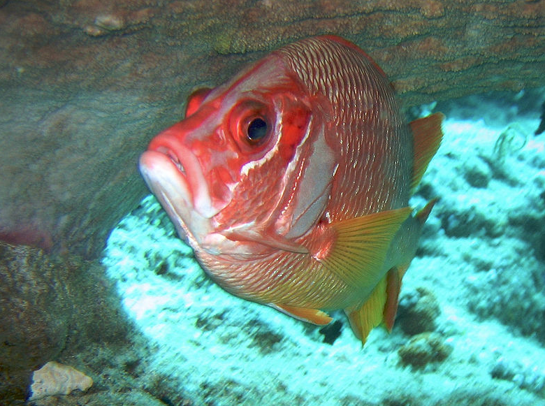 Florida FWC Is Offering a No-Cost Gulf Reef Fish Anglers License in Trade for Information Concerning Certain Catch Species